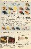 1934 Heddon Lure Catalog showing Bass Bugs, Bug -A- Bee, and Westchester Bug