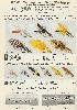 1941 Heddon Lure Catalog